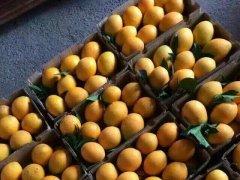 如何保证你们是正宗的、新鲜的赣南脐橙?