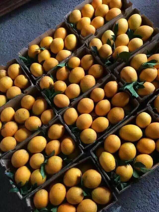 新鲜正宗的赣南脐橙装箱图片