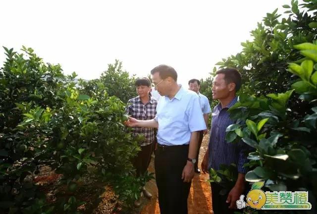 李克强总理来到赣南脐橙果园
