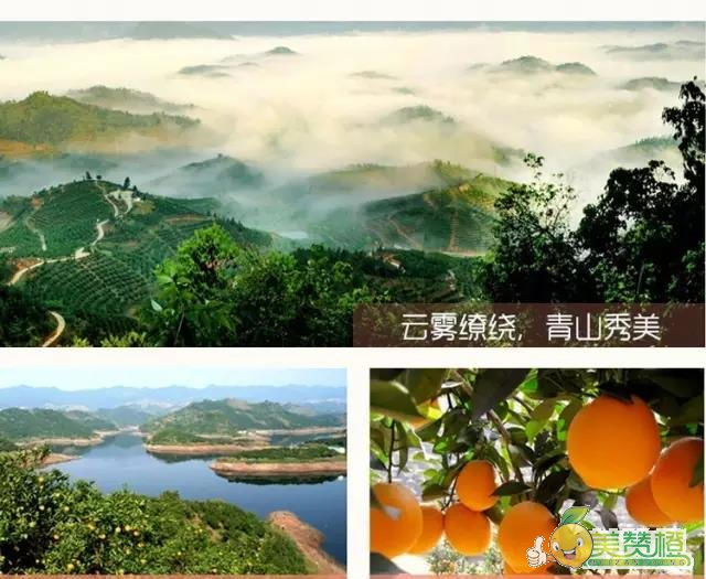 赣南具有种植脐橙的得天独厚的气候、土壤环境