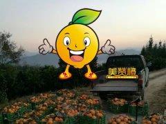 美赞橙之歌(写给我的事业,献给我的客户)