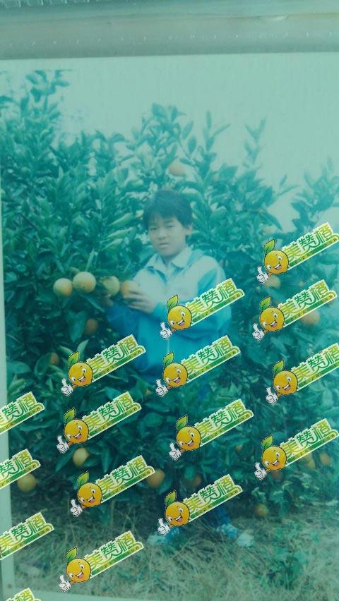 20年前的美赞橙与赣南脐橙