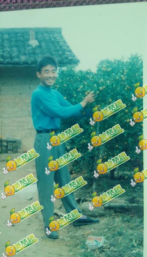 20年前的爸爸与赣南脐橙