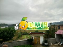 2015/11/16【雨】美赞橙脐橙园实拍