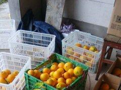2015/11/18美赞橙▪发货与分销实拍