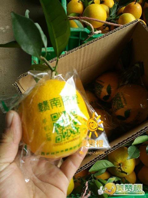 2016年11月16至30日,美赞橙采摘发货实拍