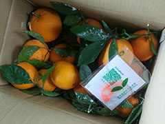 2016年美赞橙客户收货图片摘录