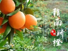 【图文并茂】赣南脐橙从1月-12月的的成长照片!
