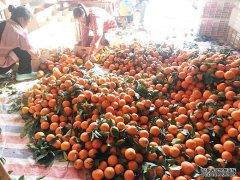 橙子是热性还是凉性?吃橙子上火吗?