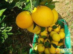 你找到的是优质赣南脐橙供应商吗?