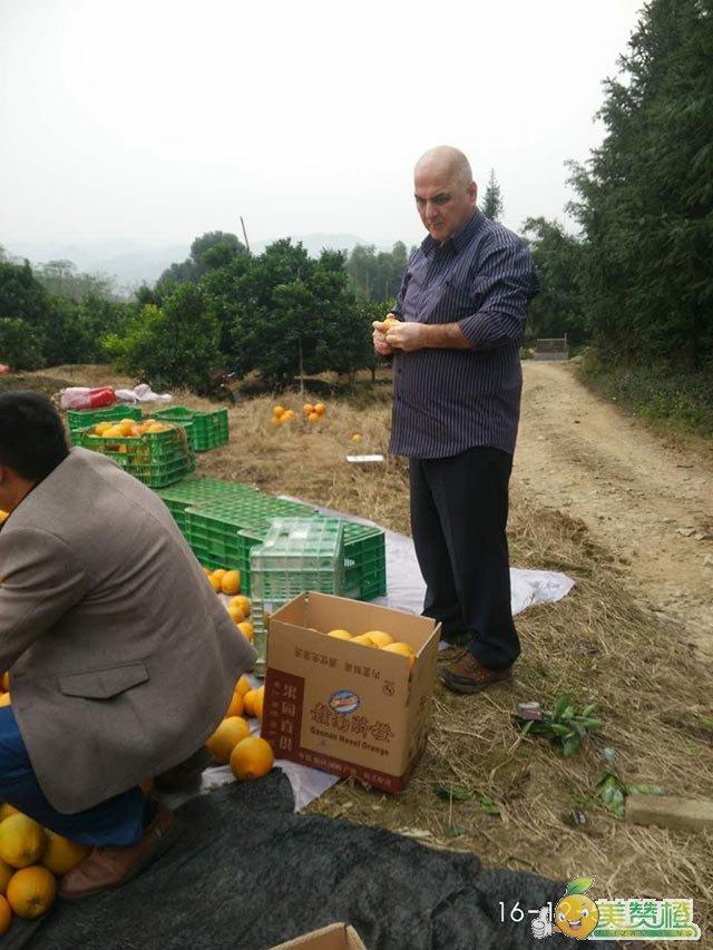 美赞橙——优质的团购供应商