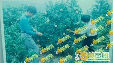 赣南脐橙果农