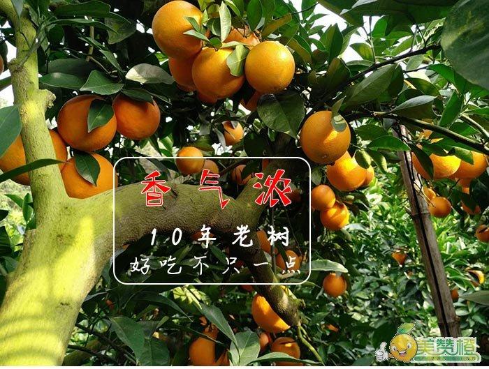 10年老树的赣南脐橙,好吃不只一点,香气浓