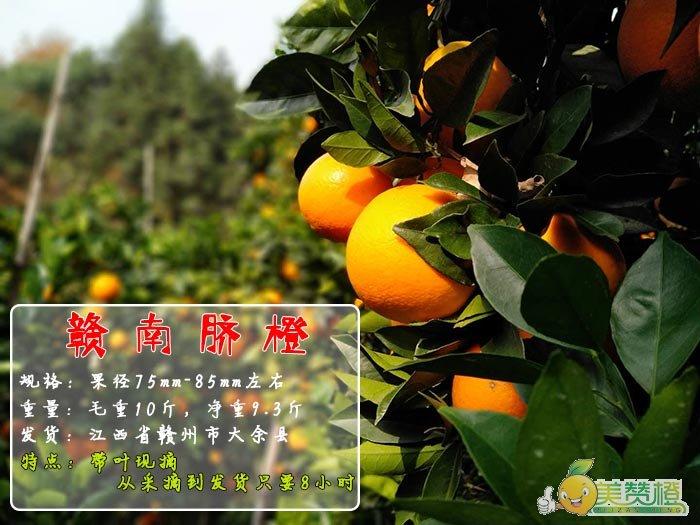 赣南脐橙带叶现摘,毛重10斤,净重9斤,果径75mm-85mm,产地江西省赣州市大余县
