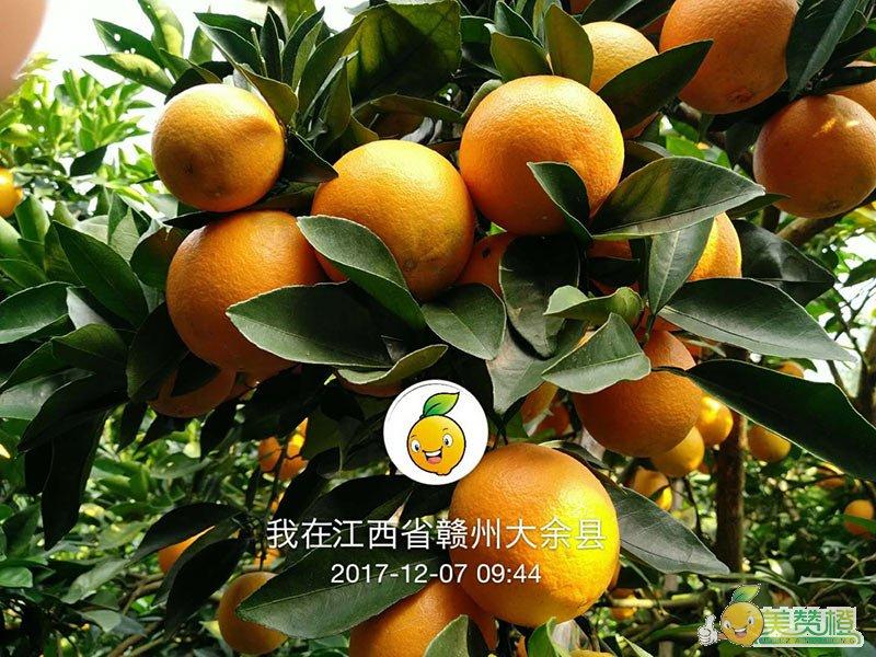 2017年12月份的赣南脐橙