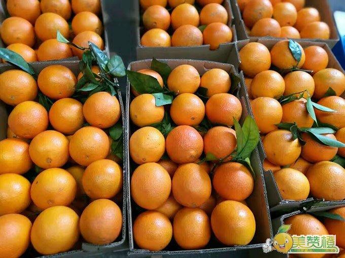 85mm最好的赣南脐橙